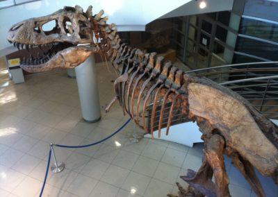 Paléontologue, Paléontologiste, Paléographe