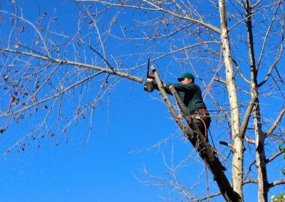 Arboriste grimpeur