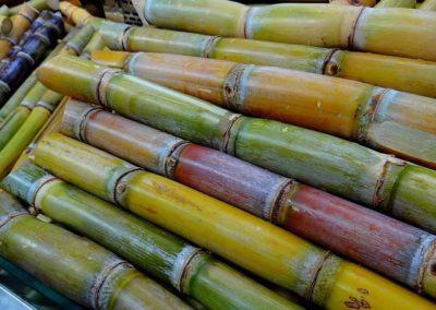 Producteur (de cannes à sucre, de pommes de terre, de protéagineux, d'oléagineux)