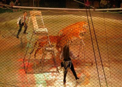 Dompteur, Dresseur d'animaux de cirque